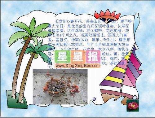 中国传统节日电脑小报 星星报图片