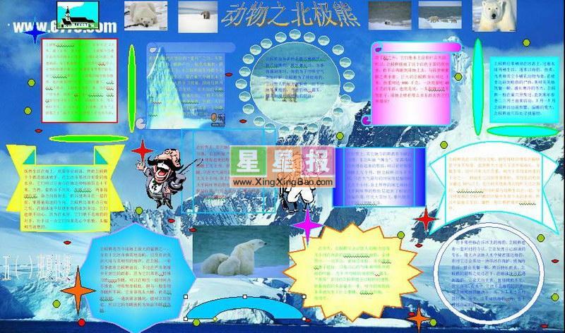 电脑小报图片――动物之北极熊