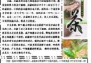关于茶的电子小报:制茶工艺