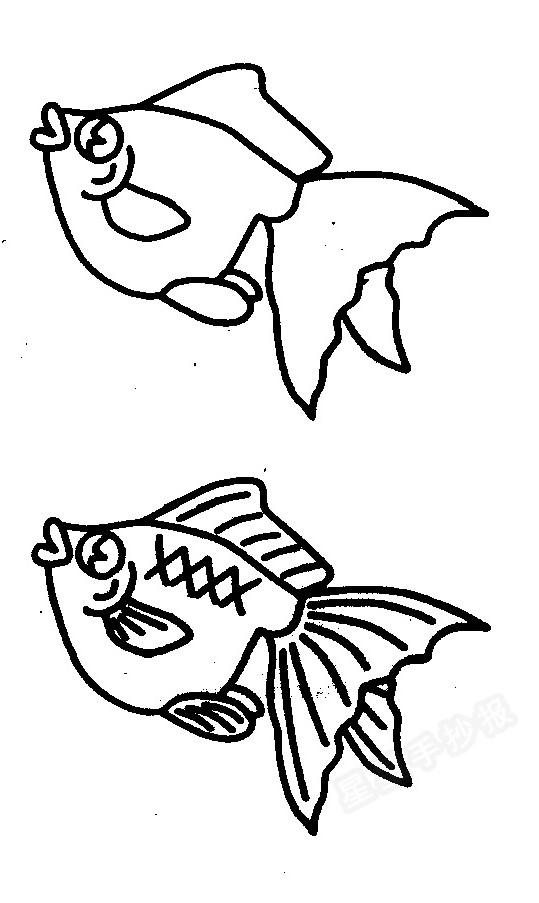 如何画金鱼简笔画图解二