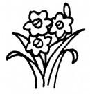 水仙花简笔画怎么画