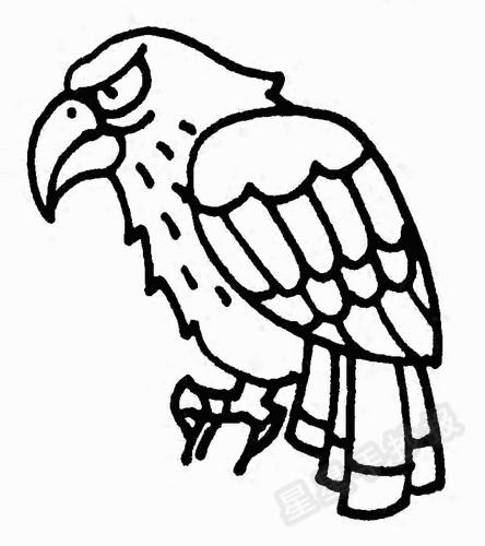 老鹰的资料:   当天空暂别响晴,大地笼罩着雨雷云风,抬头,我惊讶地发现,暴雨中,天空依然飞着老鹰,携着坚利的目光,迎着充满挑战的苍穹!