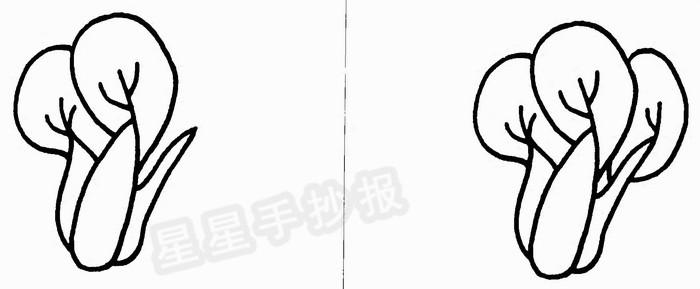 青菜简笔画