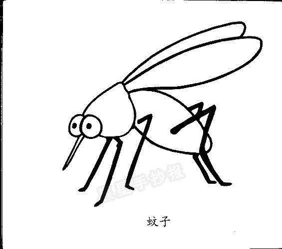 蚊子简笔画