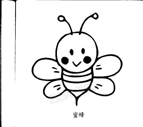 蜜蜂各种形态简笔画