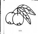 枇杷简笔画