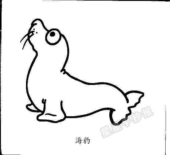 小海豹各种形态简笔画