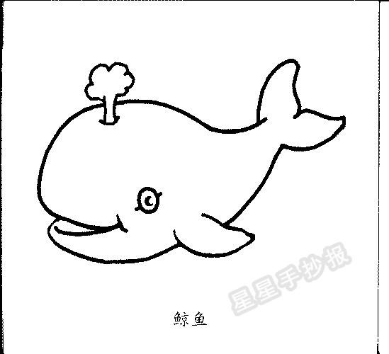 星星报 简笔画 动物简笔画 >> 正文内容   鲸鱼的小知识: 呼吸 蓝鲸