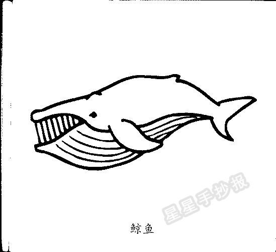 鲸鱼简笔画图片画法