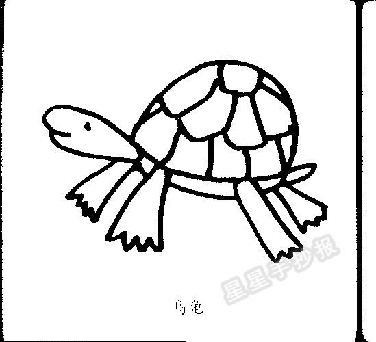 乌龟简笔画图片画法