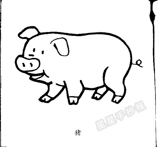 猪和猪头简笔画