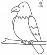 老鹰简笔画图片画法