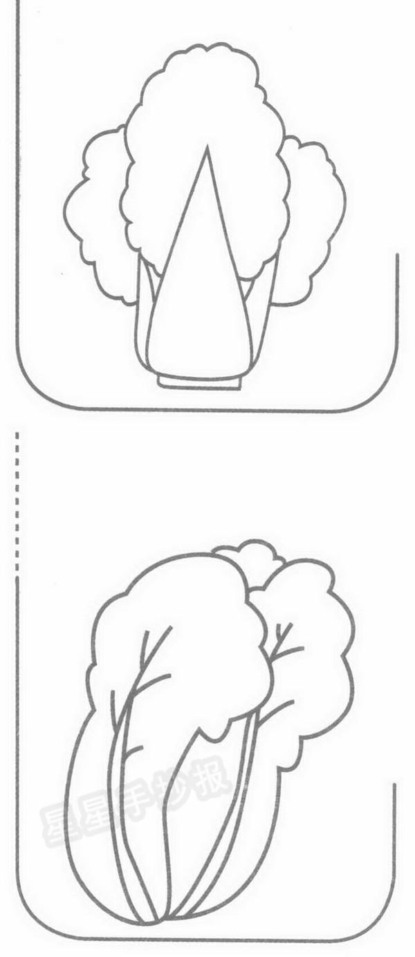 大白菜简笔画示例图片