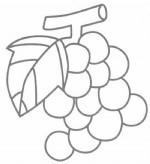 葡萄简笔画图片步骤教程