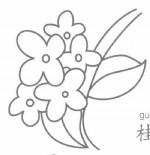 桂花简笔画