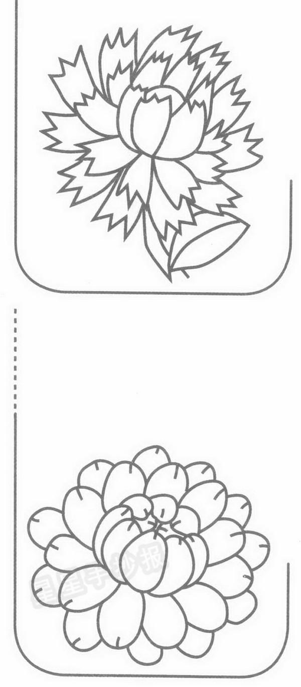 金盏菊简笔画
