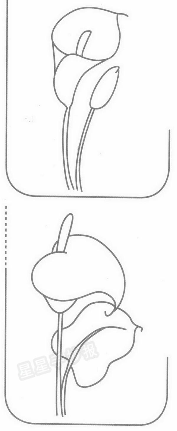 马蹄莲简笔画
