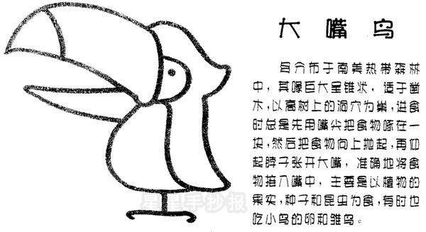 大嘴鸟简笔画
