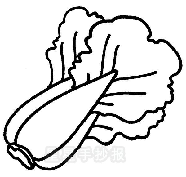 大白菜简笔画简单画法