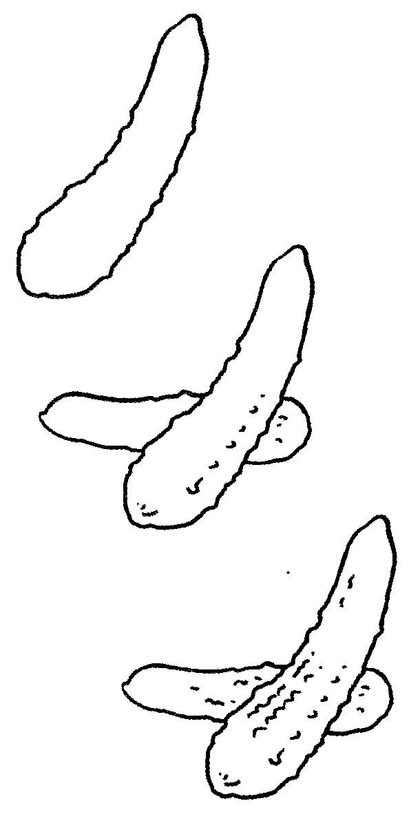 黄瓜简笔画图片大全