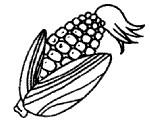 玉米简笔画图片步骤教程