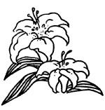 漂亮的百合花简笔画