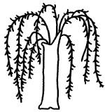 柳树简笔画图片画法