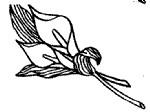 马蹄莲简笔画图片画法
