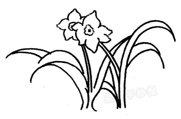 水仙花简笔画图片