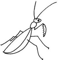 螳螂简笔画图片大全