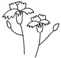康乃馨简笔画图片教程