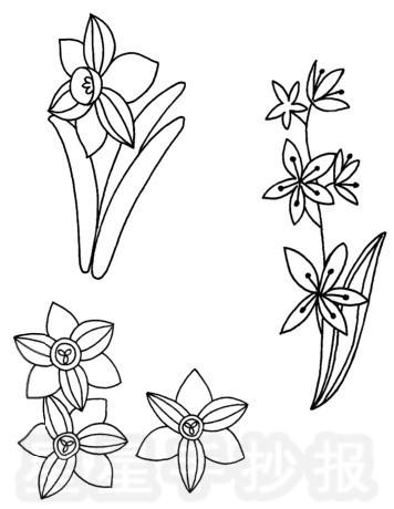 水仙花简笔画图片步骤教程