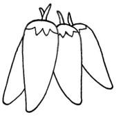 尖椒简笔画