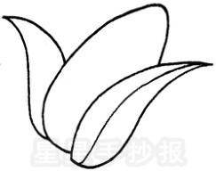 简单的玉米简笔画