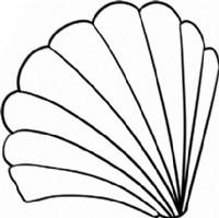 贝壳简笔画简单画法