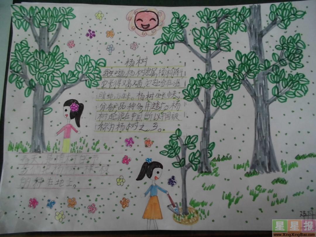 小学生杨树手抄报图片