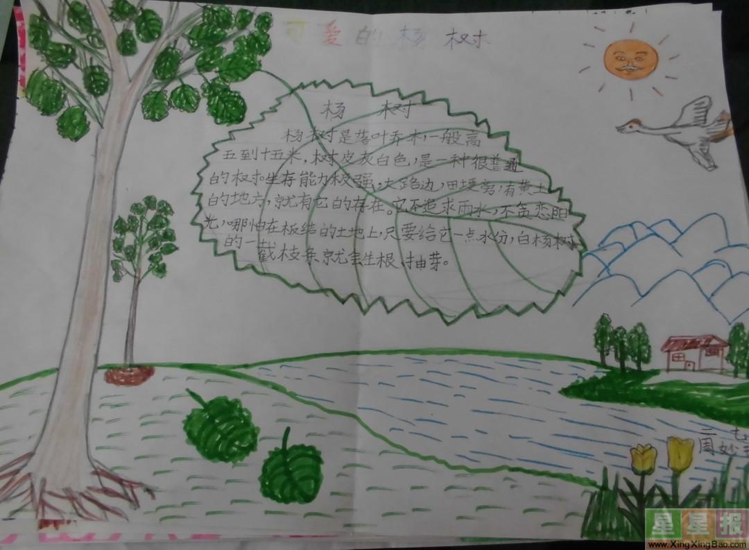 可爱的杨树手抄报图片