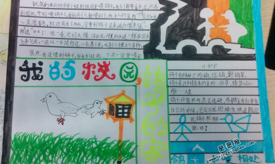 我的学校鸽子的家手抄报版面设计图
