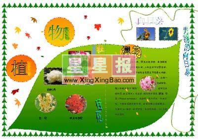 植树的步骤英文加中文